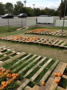 Mini pompoentjes op de pumpkin patch