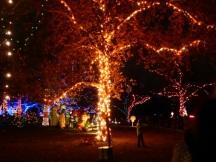 Mooi versierde bomen...