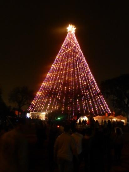 Eindpunt: de kerstboom!