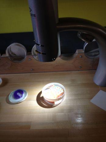Een spons onder de microscoop...