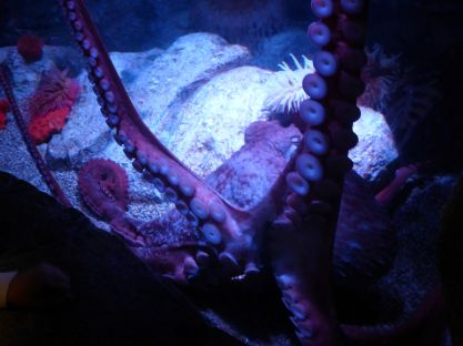 ... met grote tentakels!