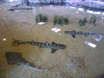 Touch pools met roggen en haaien!