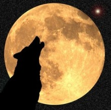 Howling wolf/coyote during full moon