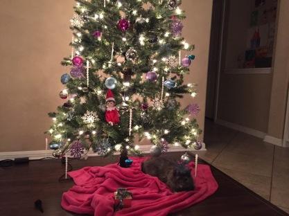 In de kerstboom....